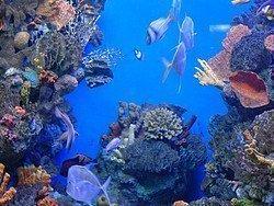 Aquarium de Barcelona, Caribe